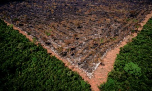 O lucro acima da natureza: BNDES entrega à iniciativa privada 26 parques naturais