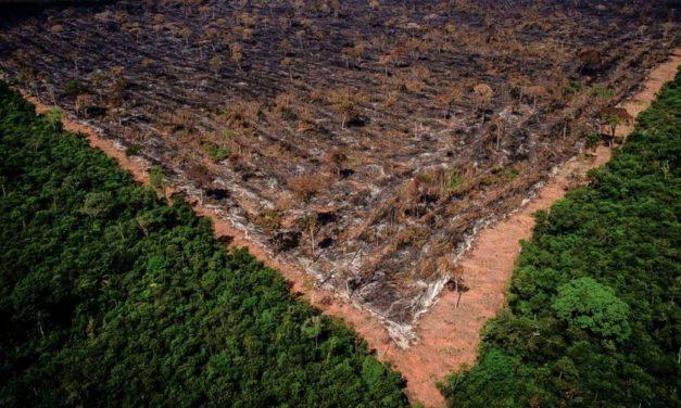 Bolsonaro é denunciado mais uma vez ao Tribunal de Haia por destruição da Amazônia